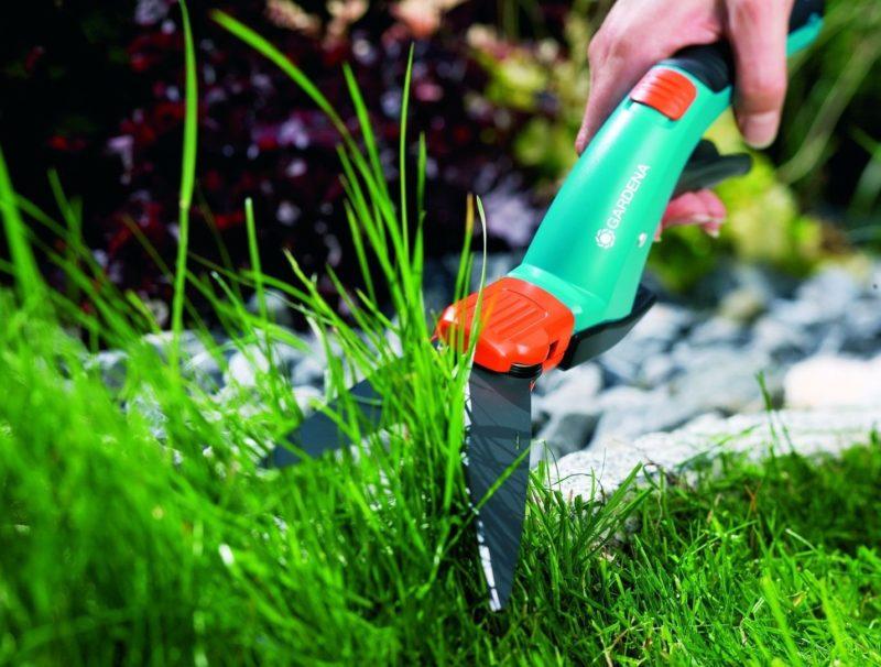Стрижка осуществляется тогда, когда высота травы достигает 10 сантиметров
