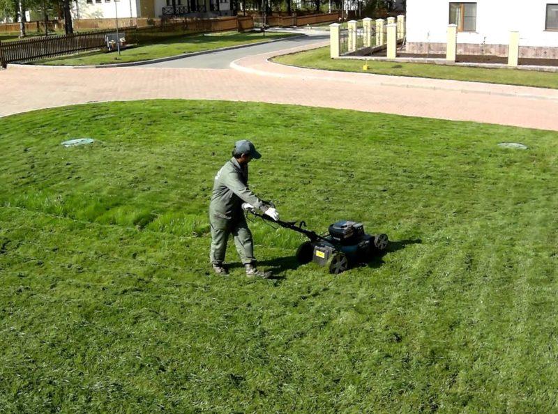 Мульчирование можно выполнять прямо во время стрижки, и использовать для этого скошенную траву