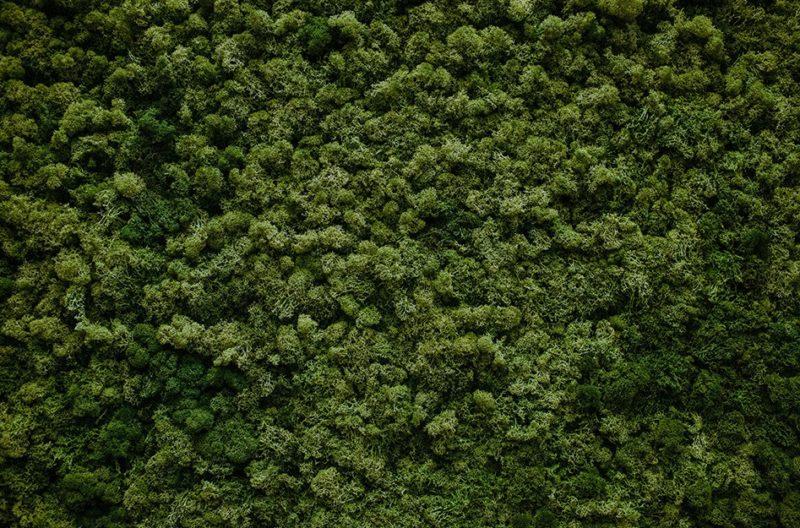 Как достать мох