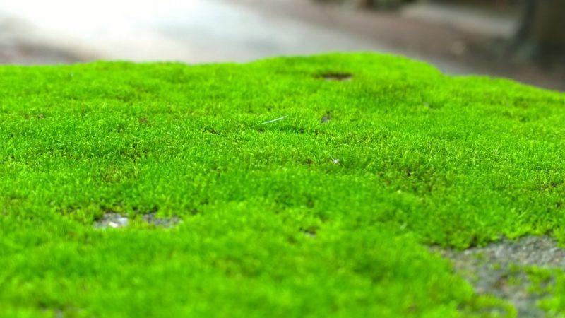 Посадка и выращивание искусственного мха фото