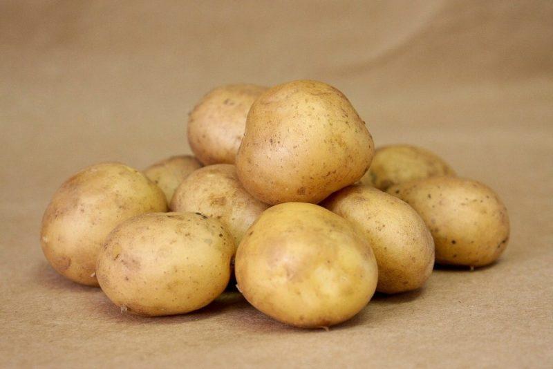 Период вегетации сорта Галла колеблется от 59 до 70 дней.