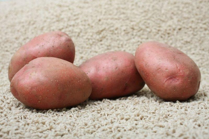 Выбираем ранние сорта картофеля фото