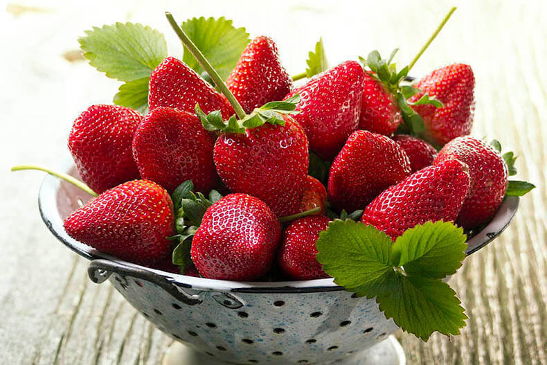 Урожай ягод собирается каждые 1,5-2 месяца