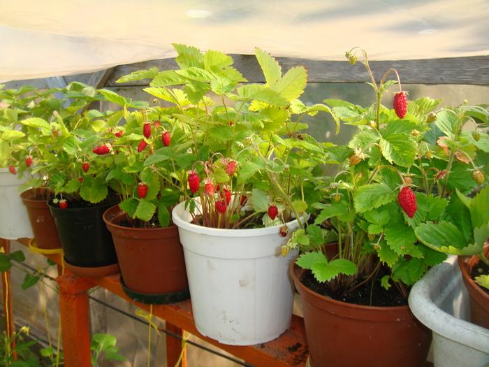 Требуется гораздо меньше простора для возделывания растений