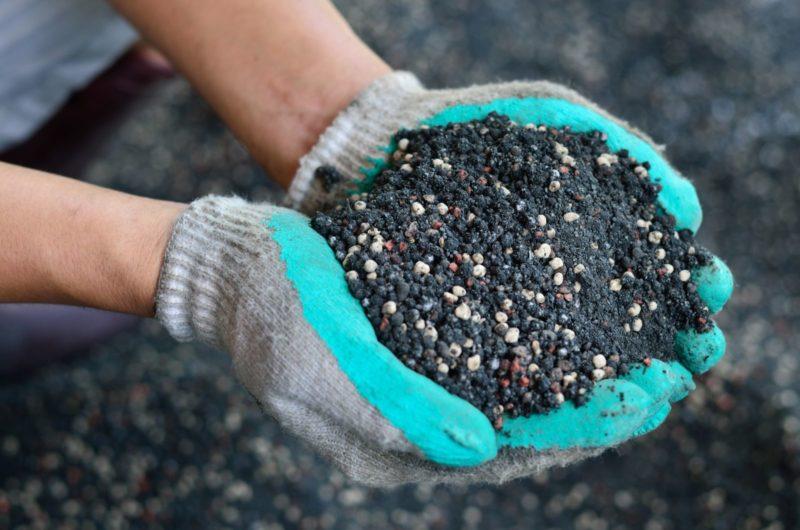 Особенности выращиваниямалины Гусар