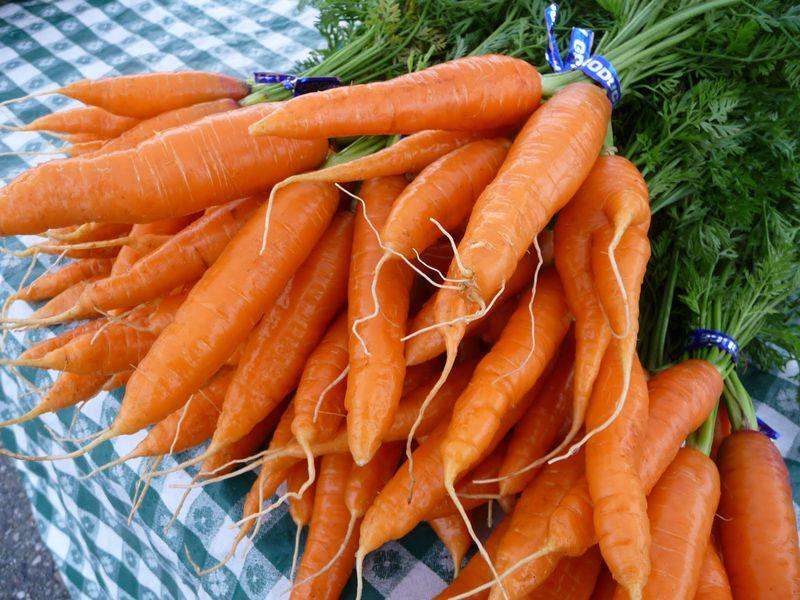 Классификация моркови по цвету