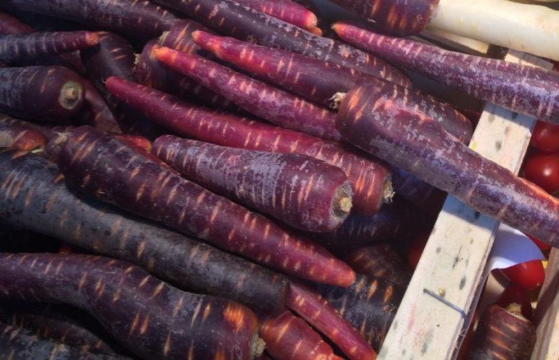 Фиолетовая морковь для всех