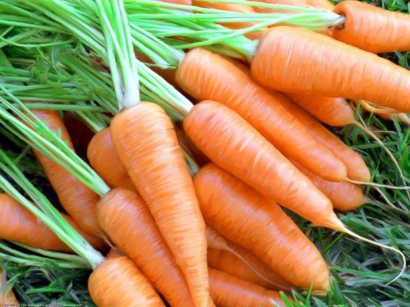 Лучшие сорта ранней моркови