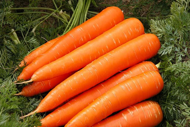 Достаточно устойчива к преждевременному цветению, но склонна к растрескиванию, до 20% собранных оранжевых конусов могут получить повреждения и стать непригодными для дальнейшего хранения.