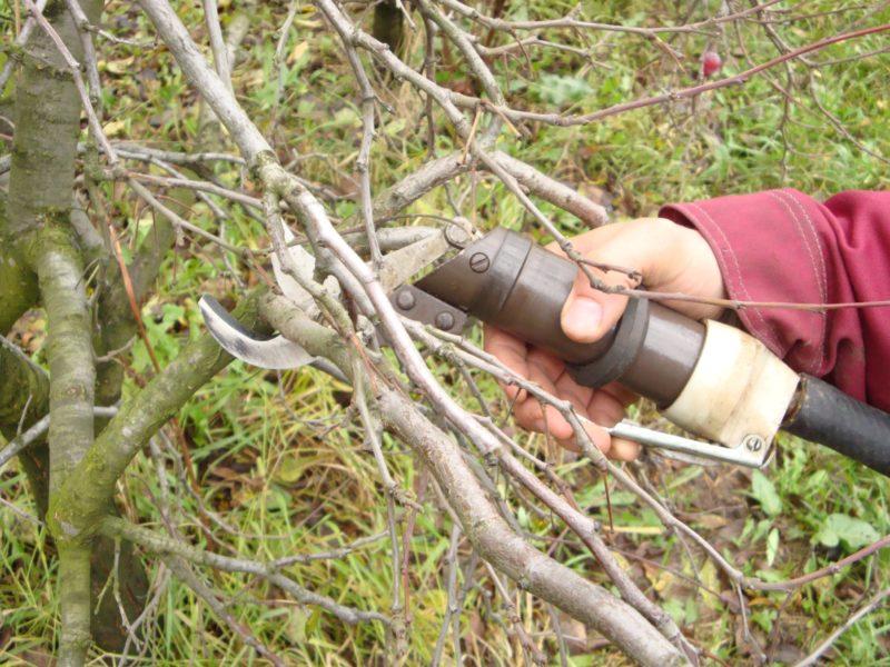 Теория обрезания дерева