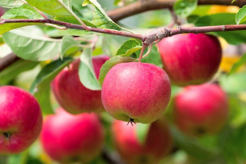 Предупредить ухудшение качественных и количественных характеристик урожая.