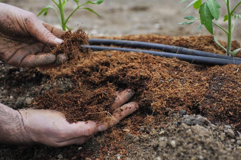 Почва должна содержать много фтора и кальция