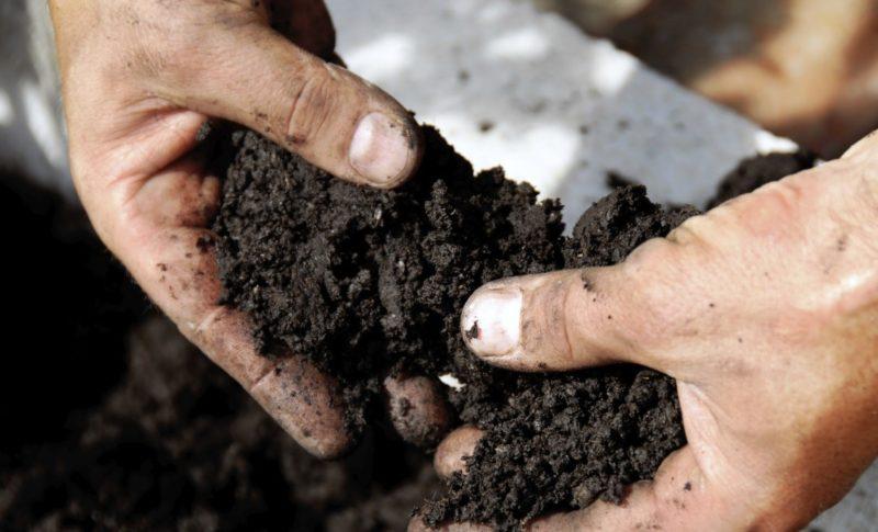 Прикрыть сантиметровым слоем почвы