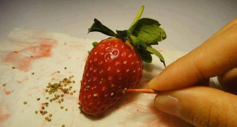 Семечки берутся из средней части ягоды либо у основания крупных сортов.
