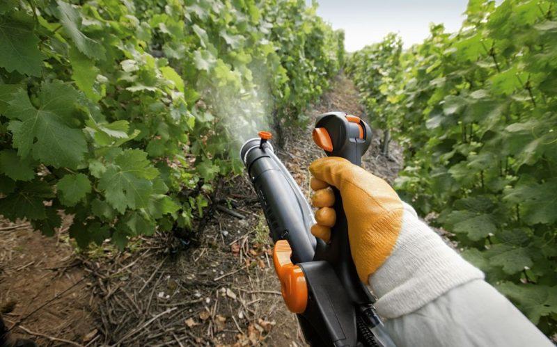 Как ухаживать за виноградом в весенний период фото