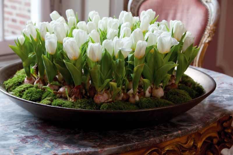 Лучше всего приобрести в специализированном магазине готовую стерильную смесь, чтобы исключить в процессе роста риск заболевания тюльпанов.
