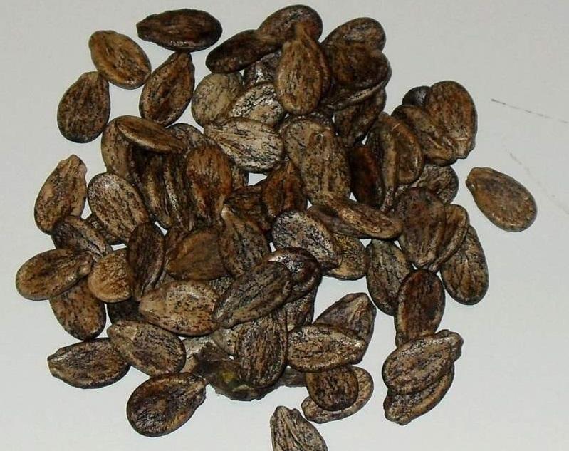 Выбор сорта и подготовка семян