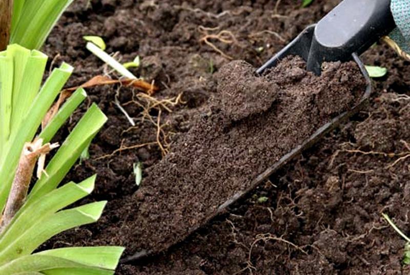 На кислых почвах необходимо проводить известкование