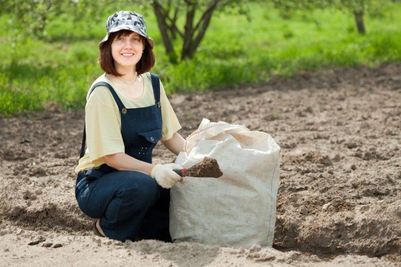 Органические удобрения с содержанием азота нужно использовать в умеренных количествах
