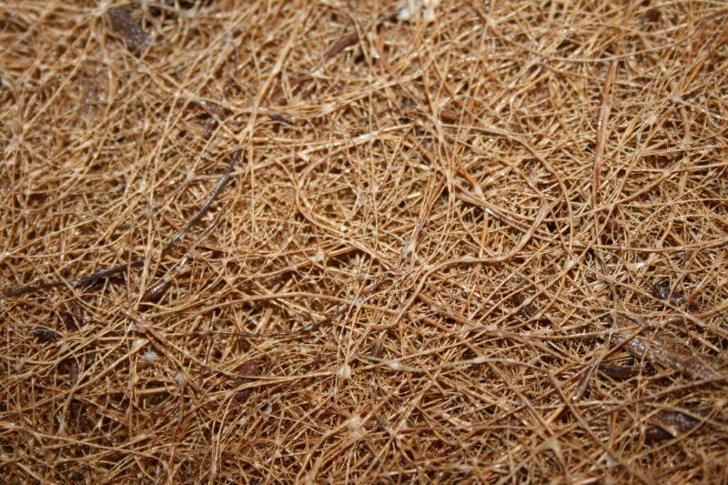 Рекомендуется добавлять кокосовое волокно и торф