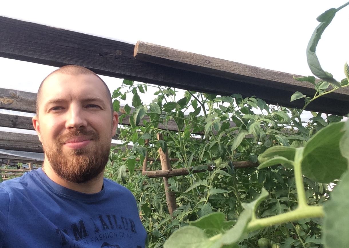 Наши помидорчики выше 2 метров в высоту