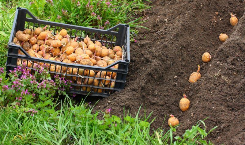 Грамотный поход — потому что нужно учитывать сроки посева, выбор нужной культуры для зелёной органики, вида и состава почвы.