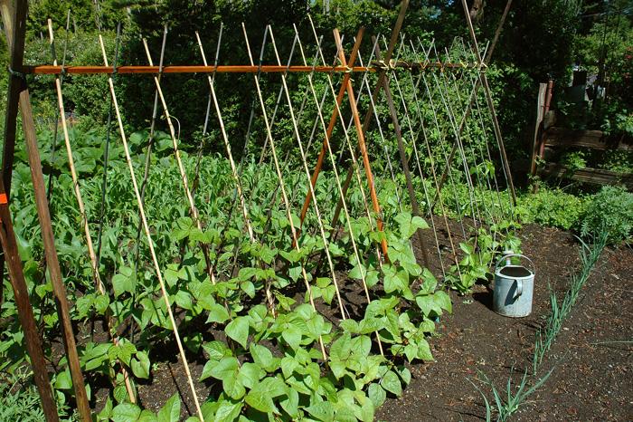 Нельзя высаживать растения для органики после родственных огородных культур. Например, предшественником картофеля был горох.