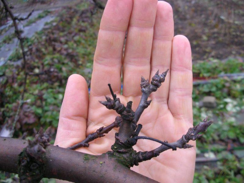 Как ухаживать за старым деревом фото