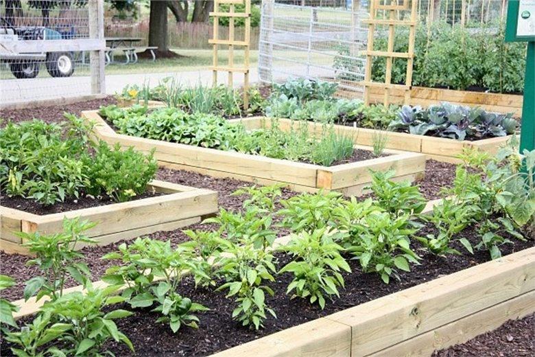 Деревянные ограждения для мест выращивания овощей