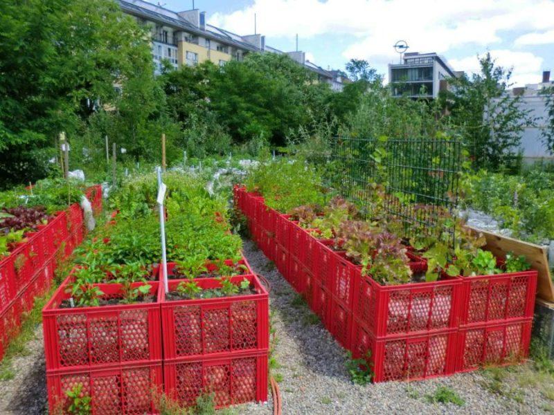 На огороженных участках для овощей будет значительно меньше сорняков, чем на необработанной территории