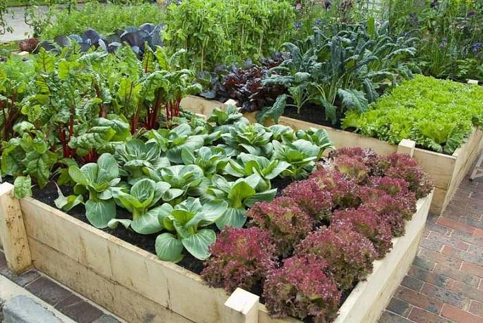 Деревянные ограждения для мест выращивания овощей фото