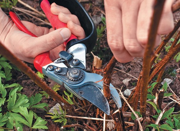 Как ухаживать за растением